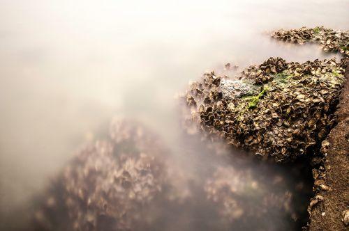 mussels long exposure rock