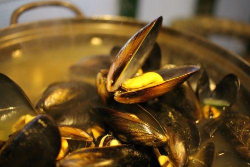 mussels in bath wall buch seashell bath