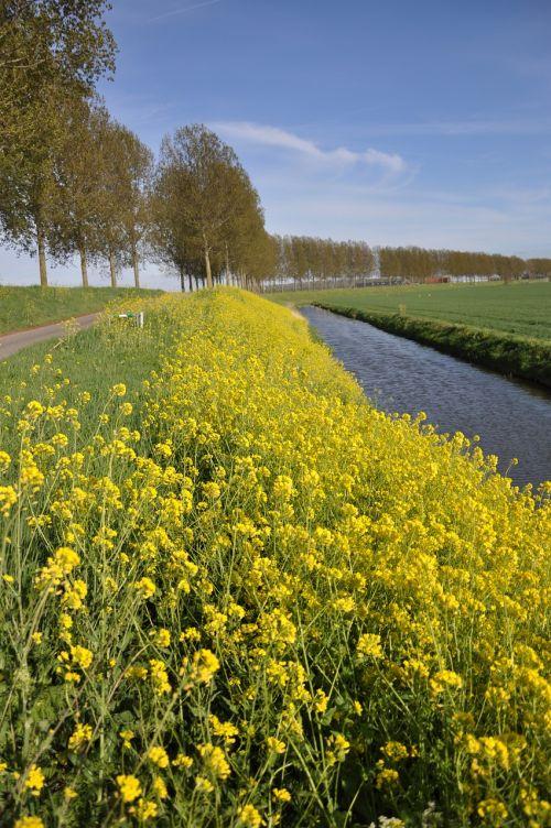 mustard seed to molendijk puttershoek