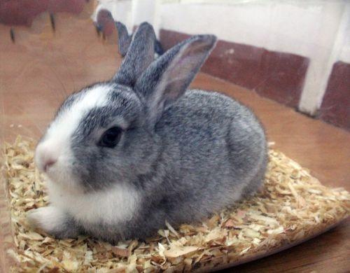 My Cute Bunny Pet