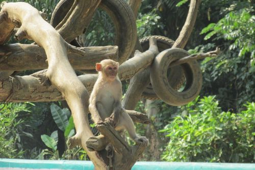 monkey tree zoo