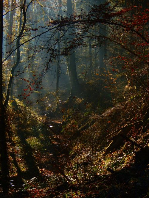 mystery forest mystical