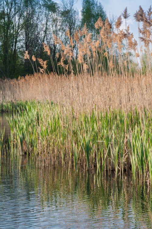 On The Banks Of Reeds