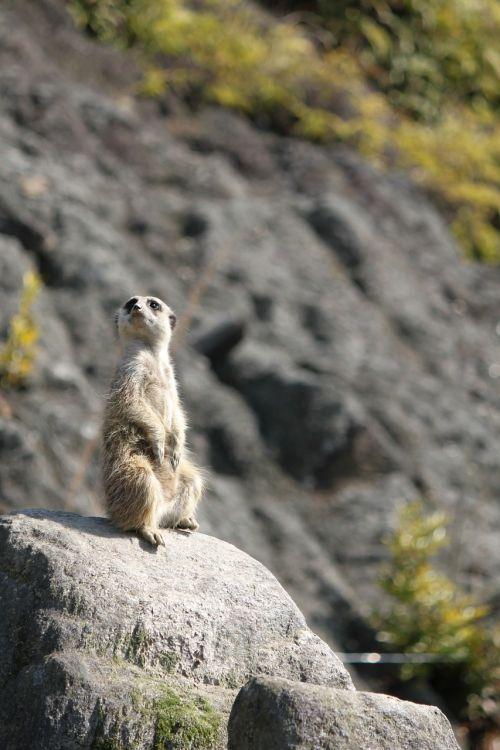 nagasaki bio park animal thinking just standing