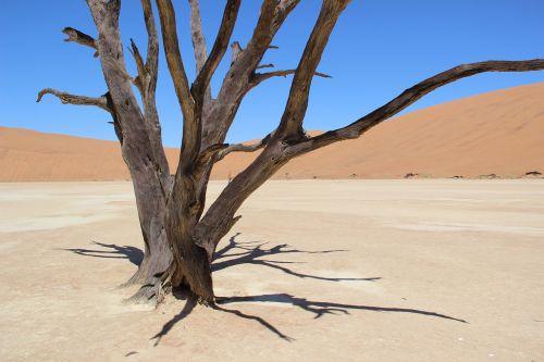 Namibija,dykuma,smėlis,afrika,medis,Sossusvlei
