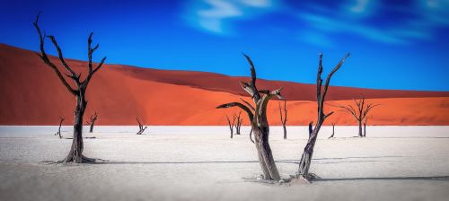 Namibija,dykuma,medis,medžiai,mirę medžiai,dangus,mėlynas,oranžinė,gamta,kopos,smėlis,smėlio kopos,panorama