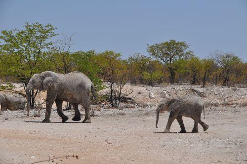 namibia desert travel