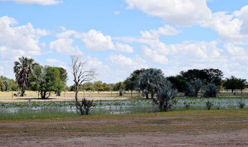 namibia oshana africa