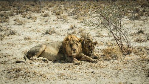 namibia namib outdoors