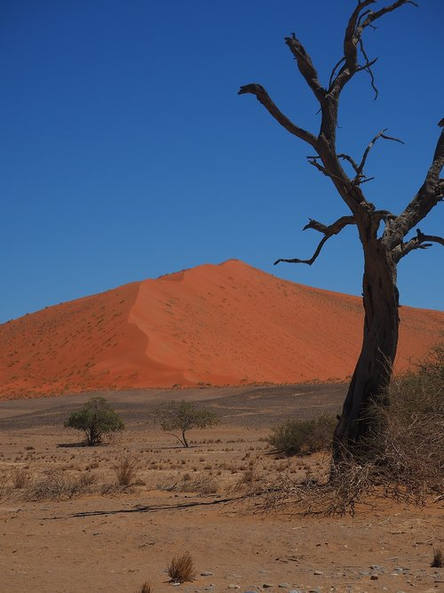 namibia  roter sand  loneliness