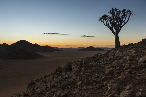 namibia  quiver tree  sunset