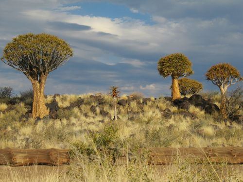 namibia desert kalahari
