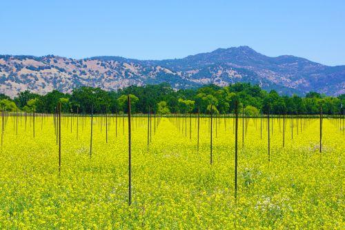 napa napa valley wine