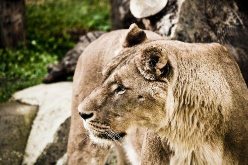 leo zoo nature