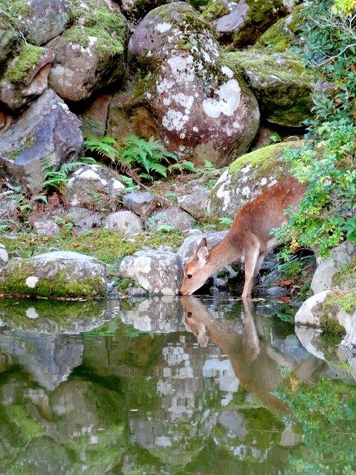 nara  japan  nature