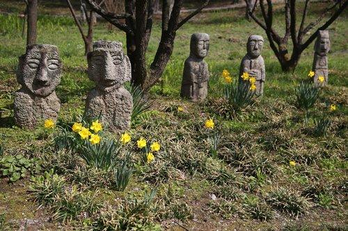 narcissus  spring  plants
