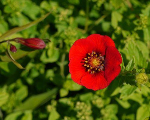 national botanic garden of wales wales carmarthenshire