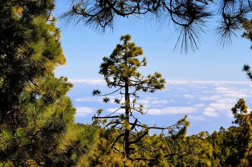 national park  la palma  canary islands