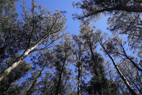 national rhododendron garden olinda dandenong ranges