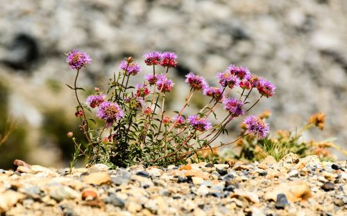 natural flowers idyll
