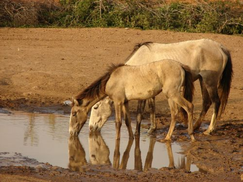 natural horse animals