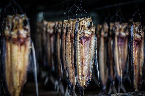 natural ecology fish