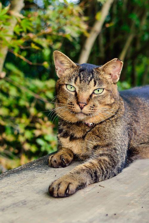 natural cat creatures