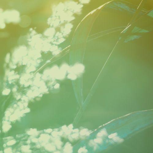 natūralus,žalias,šiaudai,makro,sezonas,botanikos,saulės šviesa,žiedas,botanikos