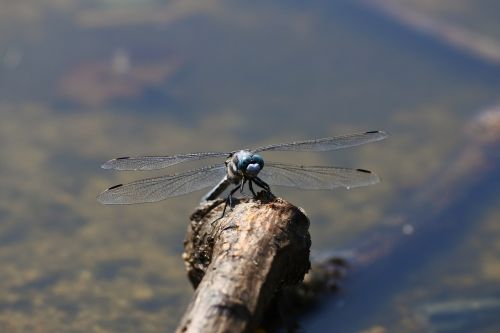 natural landscape insect