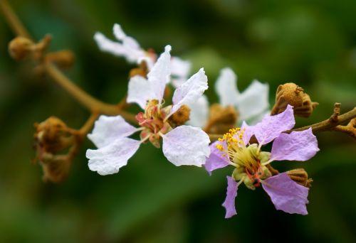 natural bunches of flowers bang lang