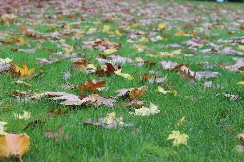 natural leaf lawn