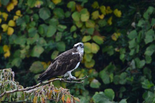 natural bird outdoors