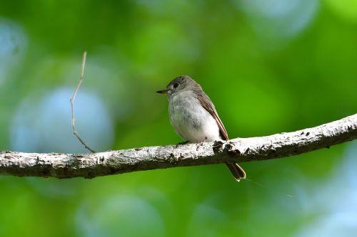 natural bird wild animals