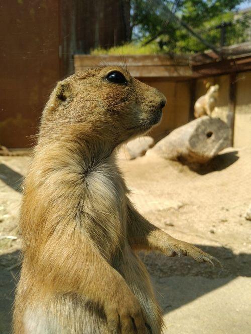 natural wild animals animal