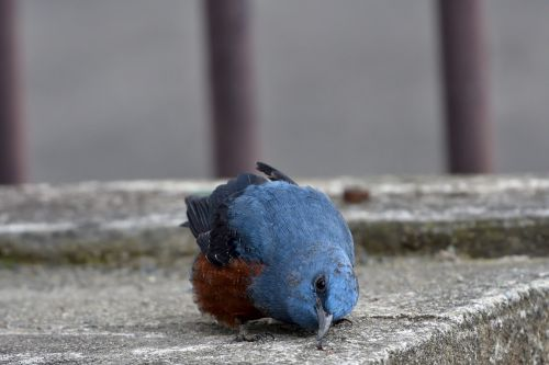 natural outdoors bird