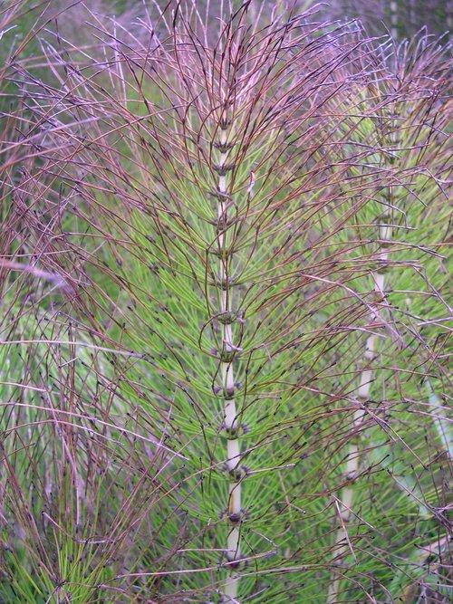natural  wallpaper  plant