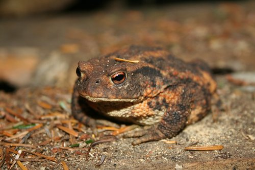 natural  frogs and toads  wildlife