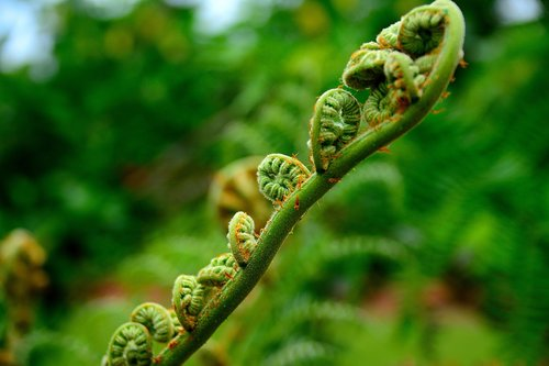 natural  farming  bracken