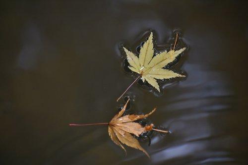 natural  landscape  autumnal leaves