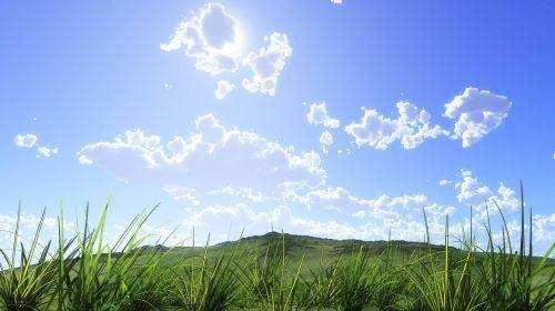 natural leaf grass
