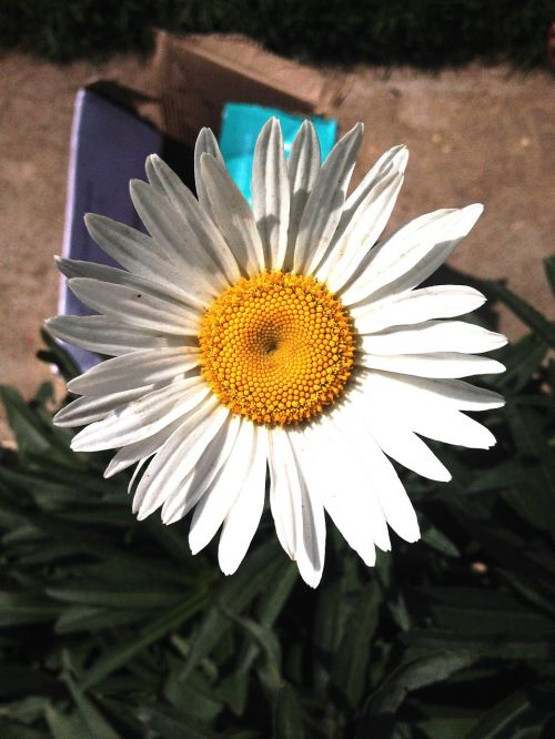 natural flower blooming