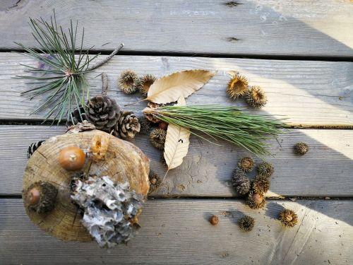natural art honeycomb echinacea