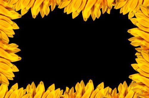 rėmas, natūralus, spalva, spalvos, apdaila, gėlių, gėlė, gamta, modelis, saulėgrąžos, geltona, izoliuotas, juodas & nbsp, fonas, natūralus rėmas
