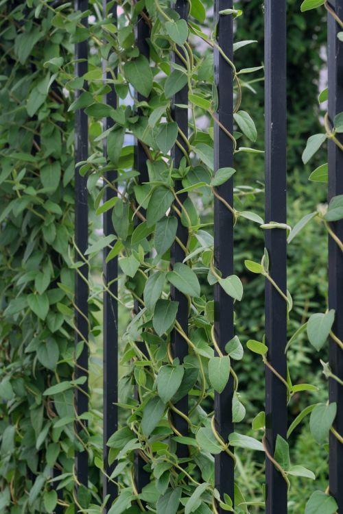 natural landscape fences plant