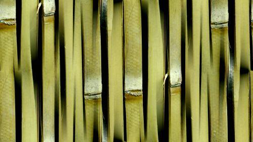 Natural Seamless Bamboo Background