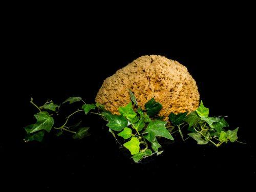 natural sponge ivy decoration