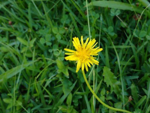 naturaleza flor prado