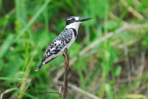 nature africa bird
