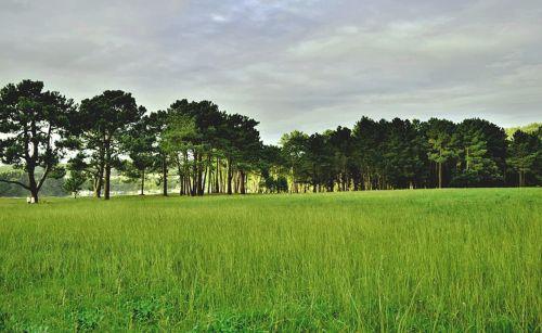 nature prado trees