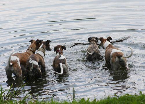 nature animals dogs